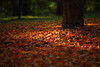 Fall Carpeting, Columbia MO