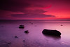 Hot Pink Cool Purple, Lake Sam Rayburn TX